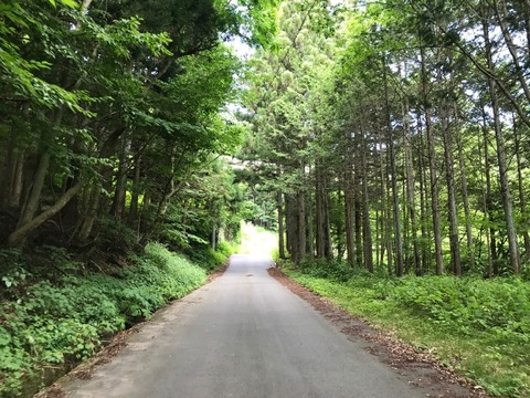 内山峠の旧道はヘアピンにつぐヘアピンを抜け、標高を稼ぎます