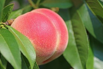 peach-2721852_1920