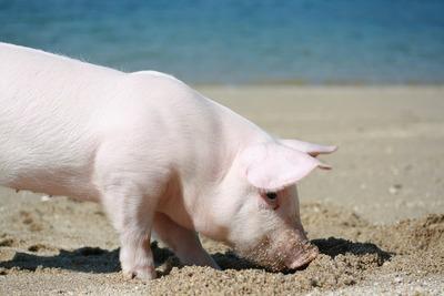 1レモンポーク豚