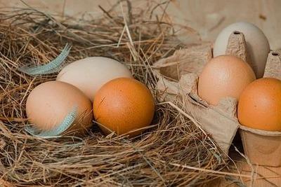 大寒 画像�鶏の卵