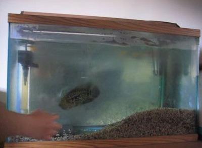 アグレッシブ魚