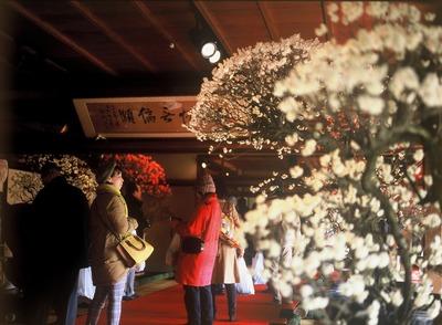 長浜盆梅展4