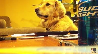 ギター好き犬