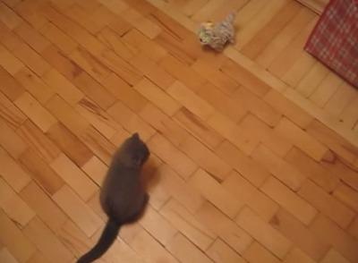 ドロップキック猫
