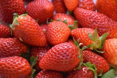 strawberry-4147544_1920