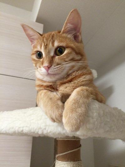 cat-2405691_1920