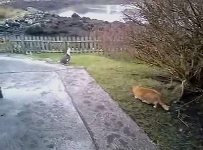 没有保护的猫