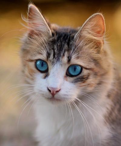 cat-3336579_1920