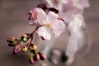 画像� 春分
