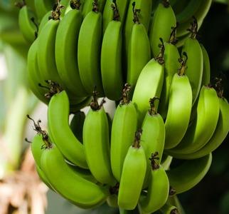 バナナ(プレゼント画像)