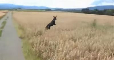 飛び跳ね犬