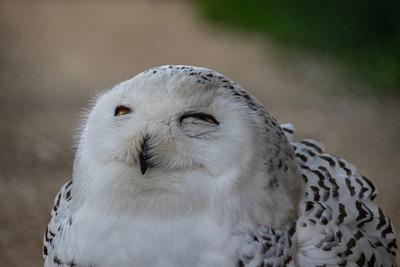 owl-4227598_1920