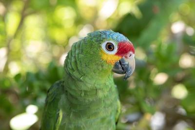 parrot-3682915_1920