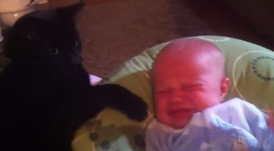 泣きやます猫