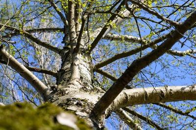 tree-4161387_1920