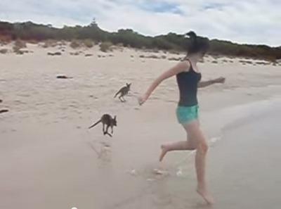 溺れるカンガルー