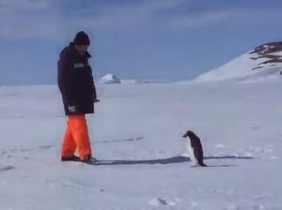 キレるペンギン