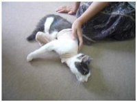 義足の猫・育生なるみ