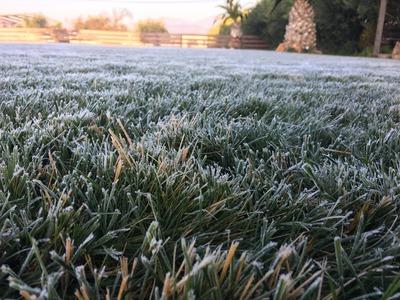 写真�(霜がついた畑)