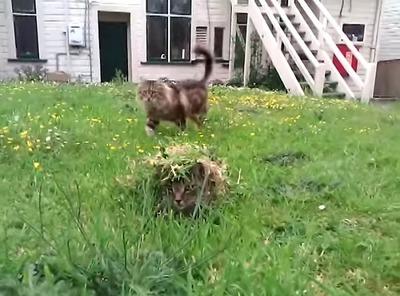 ドッキリ猫