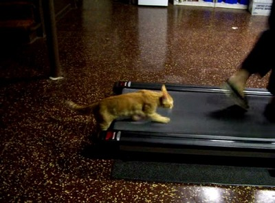 ルームランナー猫