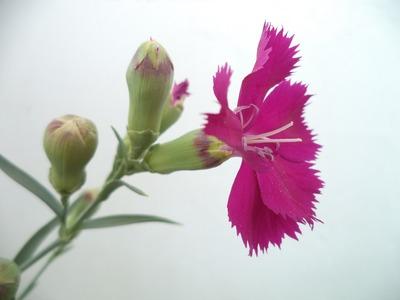 flower-2714730_1920
