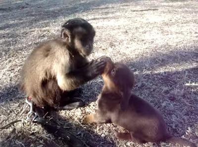 ムツゴロウさん猿