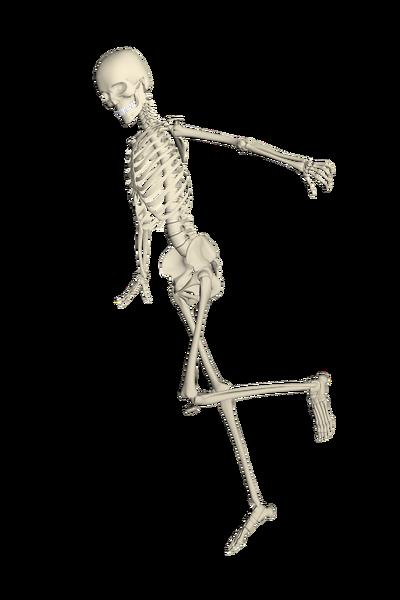 skeleton-1654866_1920