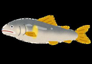 fish_ayu2