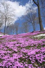 Sakura・Valley