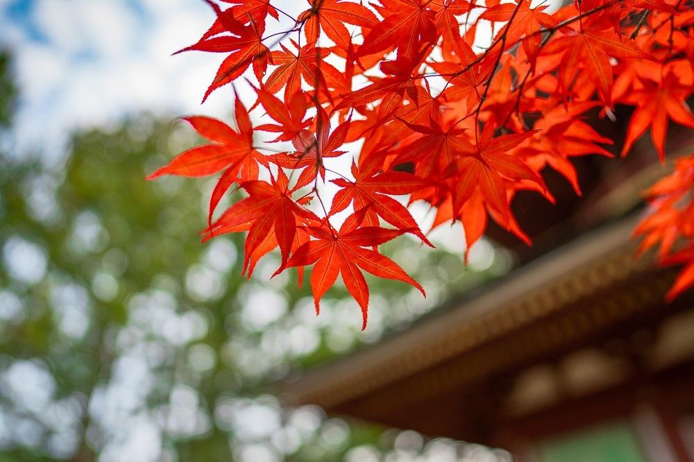 maple-leaf-5695084_1280
