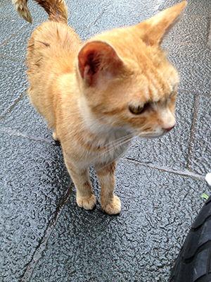 伊勢神宮の猫