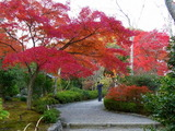 京都紅葉2010 032