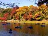 京都紅葉2010 013