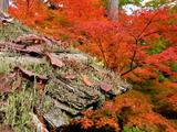 京都紅葉2010 035