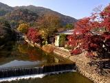 京都紅葉2010 003