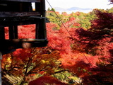 京都紅葉2010 030