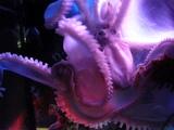 美ら海水族館�
