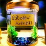 IMG_20121111_175203