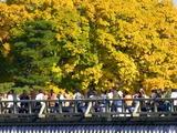 京都紅葉2010 010