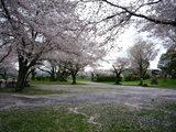 桜吹雪コート