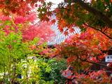 京都紅葉2010 009
