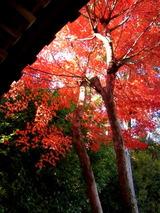 京都紅葉2010 019