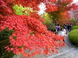 京都紅葉2010 036