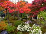 京都紅葉2010 005