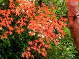京都紅葉2010 020