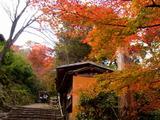 京都紅葉2010 037