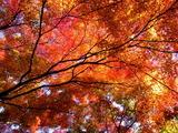 京都紅葉2010 016