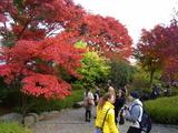 京都紅葉2010 034