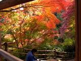 京都紅葉2010 033